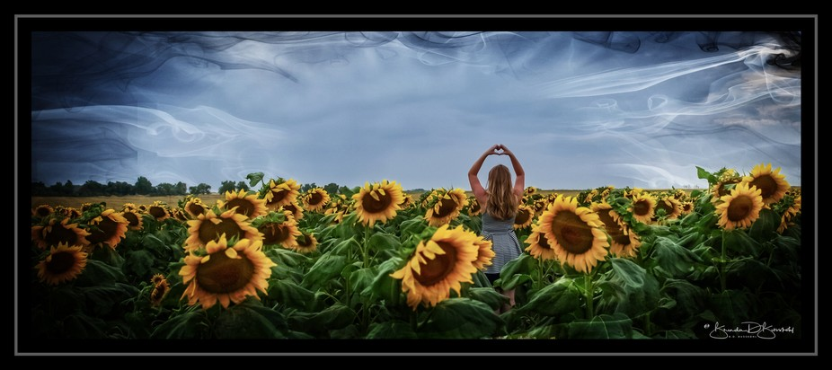 Beautiful field of Sunflowers & Kate