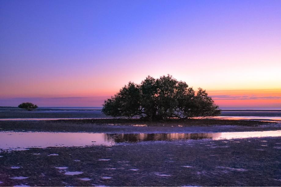 Marapikurrinya mangroves