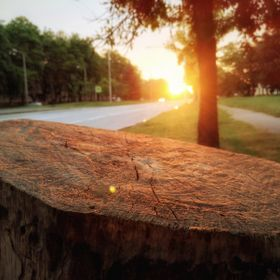 The photo shows a frame of a tree on the background of the picturesque green landscape of the sunny city street; illuminated by the gentle rays o...