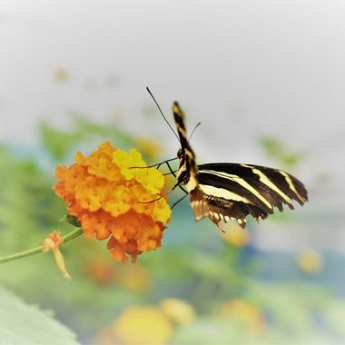 Love photographing In The Butterfly House at St Andrews Botanical gardens so happy I got this Capture
