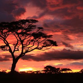 This beautiful sunset occurred during my photo group's first evening in Tanzania's Serengeti.