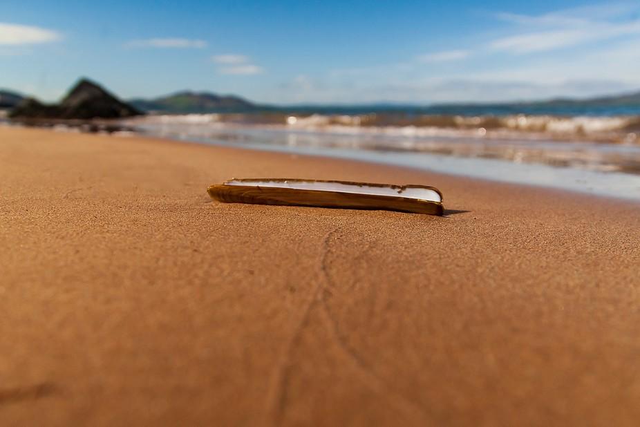 A lone shell on Ladies Bay Beach Buncrana.