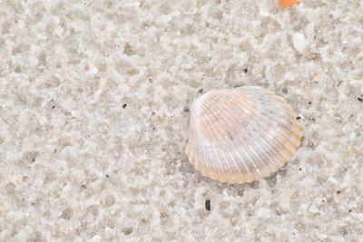 Florida Shell