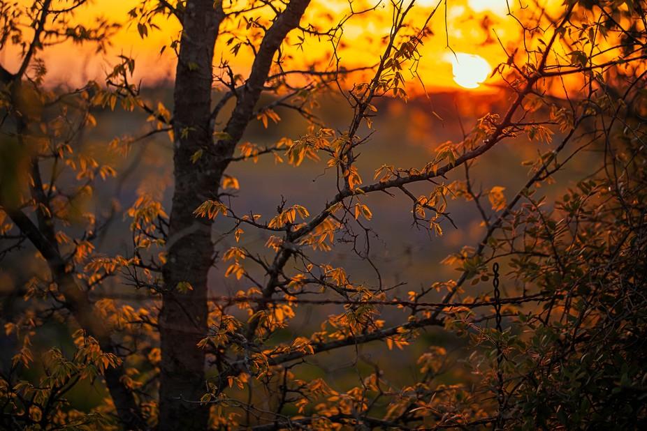 Sun Kissed leaves