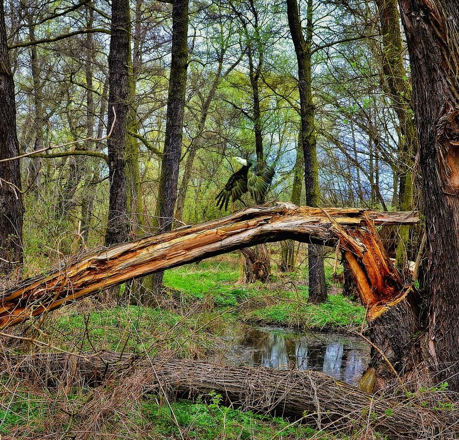 Život v lužním lese
