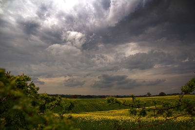 Stormy Fields