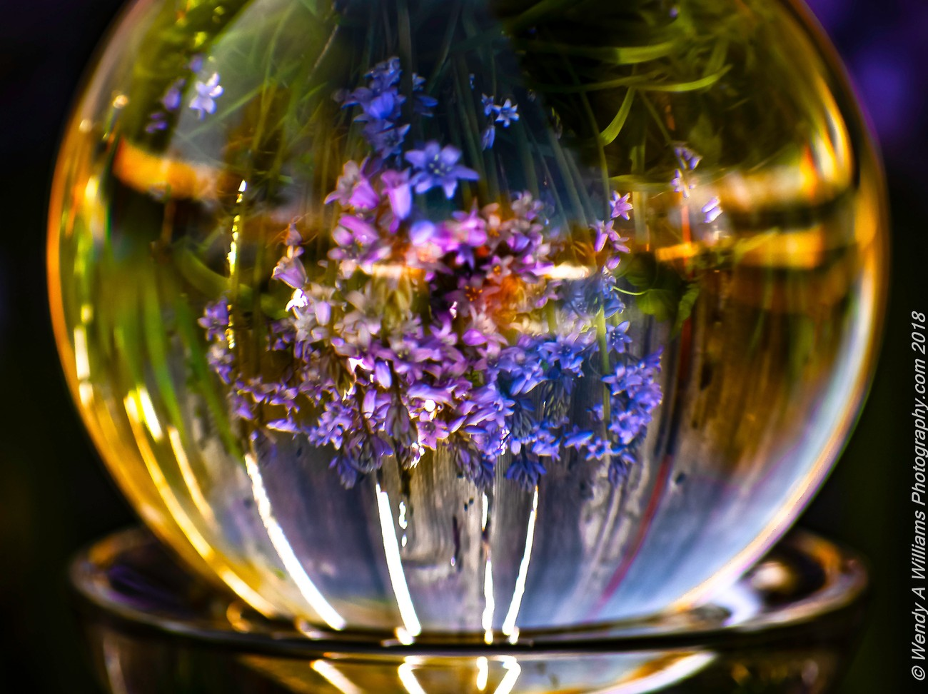 Using my LensBall to play with nature and spring shots. It is a way of celebrating earth day