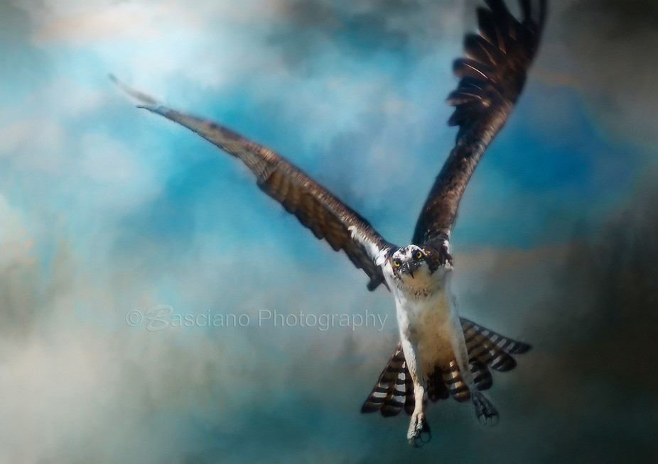 Osprey Incoming