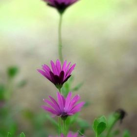 A worms eye view of a lovely flower dressed in purple.