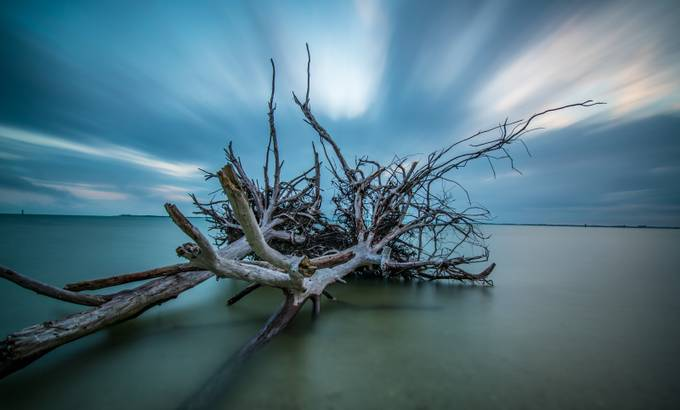 Mother Natures Signature by shawnmurphy_7890 - Fallen Trees Photo Contest