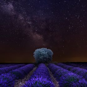 A clear night in the summer, the lavender in bloom direct the look towards a solitary tree, which rests under a mantle of stars. Brihuega - Guada...