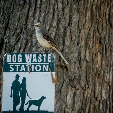 Taking a break on a park sign near Lake Travis, Texas