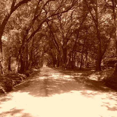dirt road - Bulluch County, GA