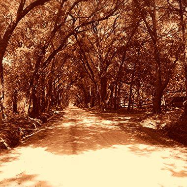 dirt road - Bulluch County, GA copy