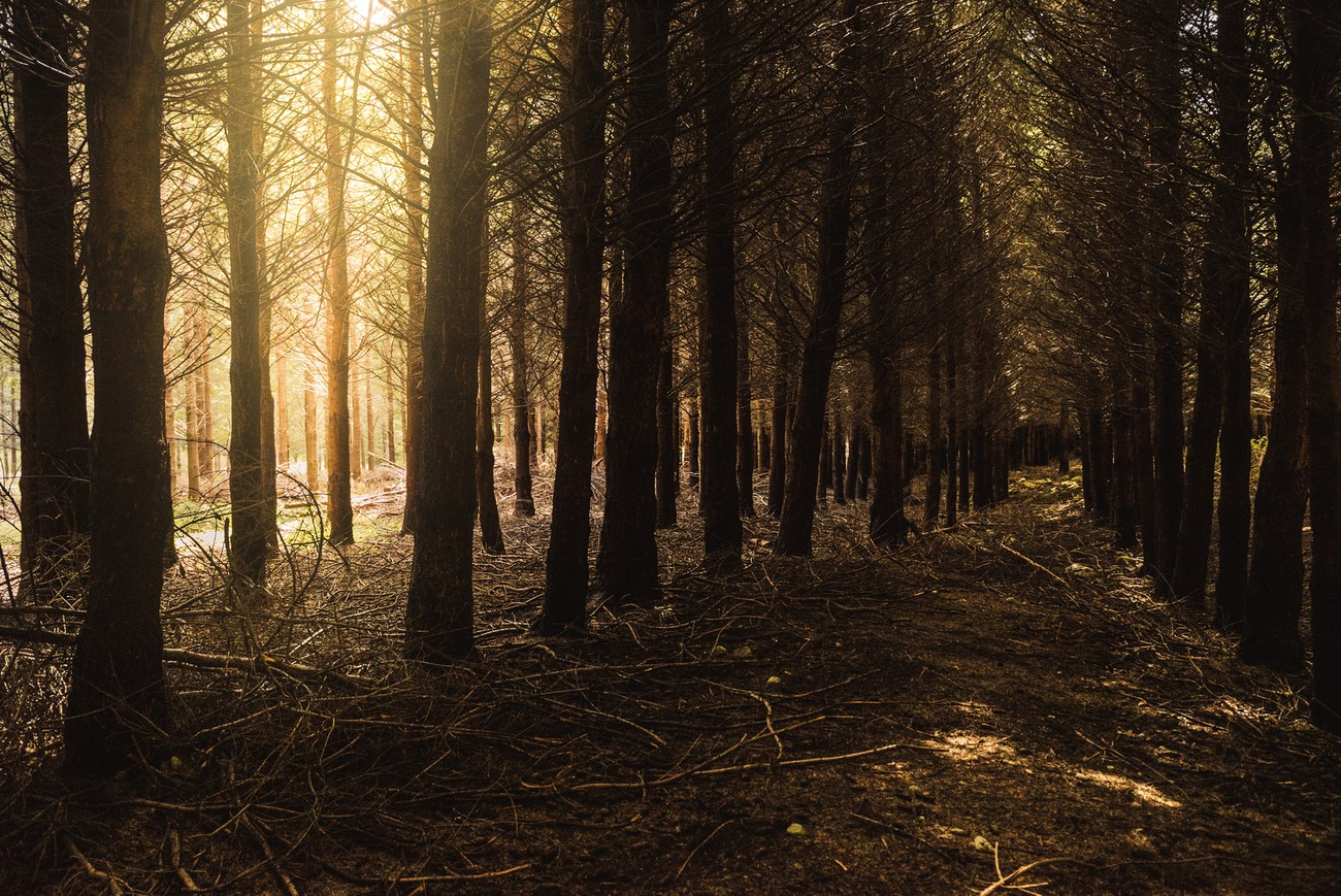 The sun shining through the branches in this dark woods area looked so dramatic, I had to stop. Nearby Rotorua lake.