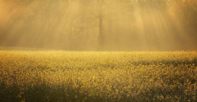 Sunlight  by KateBarry - It is Yellow Photo Contest