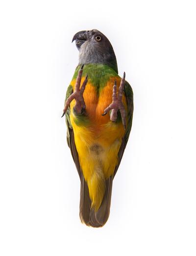Bird from underneath