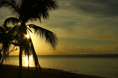 Sunrise with Palm Tree