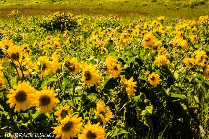 May wildflowers