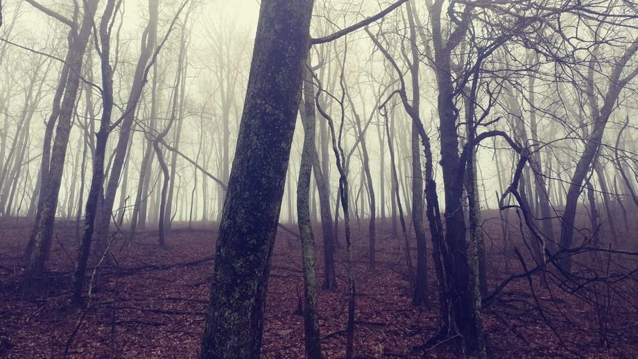 Eerie beauty