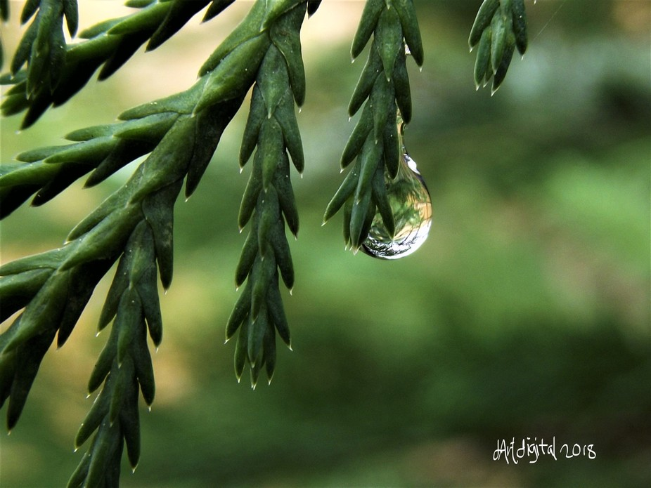 I love to make macro captures, rain, dew, water drops are some of my favorite things to capture!