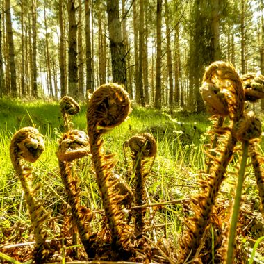 Found a nest of Baby Aliens in the woods today ........ !!       Luckily ...... Mummy was NOT about .. !!