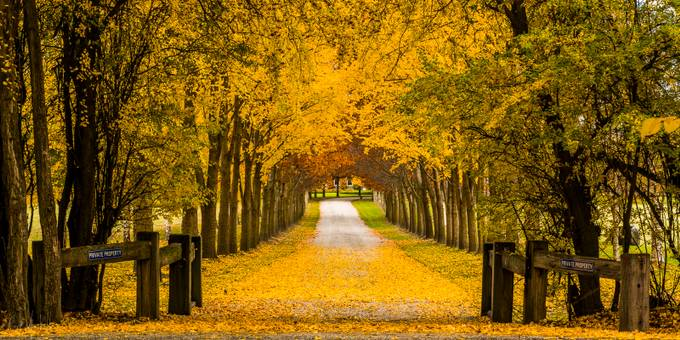 arrowtown by corymarshall - It is Yellow Photo Contest