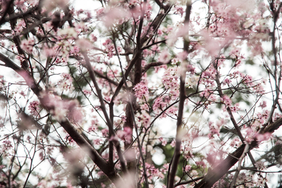 Branching Blossoms