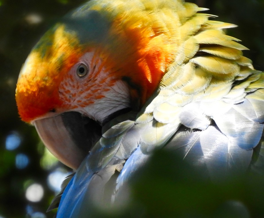 This female macaw was keeping a close eye on me as I was taking her picture.