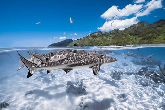 sharks in paradise by romainbarats - Social Exposure Photo Contest Vol 16