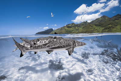 sharks in paradise
