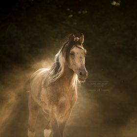 This stallion was extremely playful and after having a couple rolls in the dirt he began to trot away. The dust began to fall away and create thi...