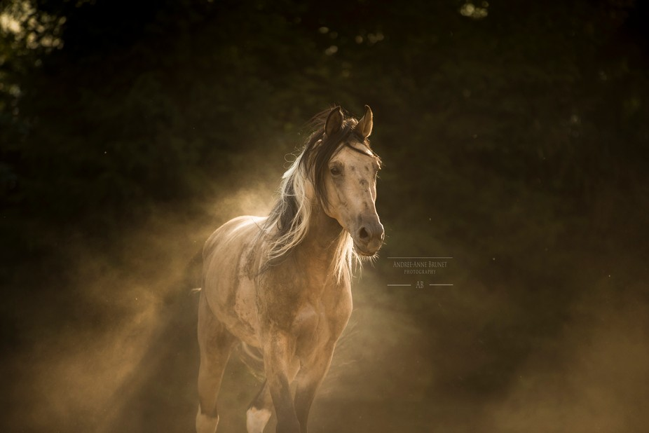 This stallion was extremely playful and after having a couple rolls in the dirt he began to trot ...