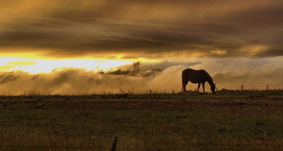 Steamboat Horse