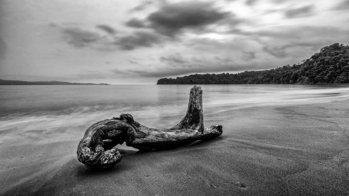 Beaches Choco  by christiankieffer - Fallen Trees Photo Contest