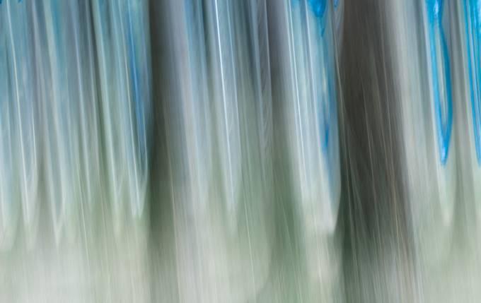 Bleu Trees