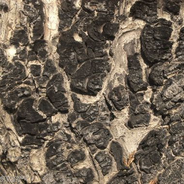 High contrast bark texture