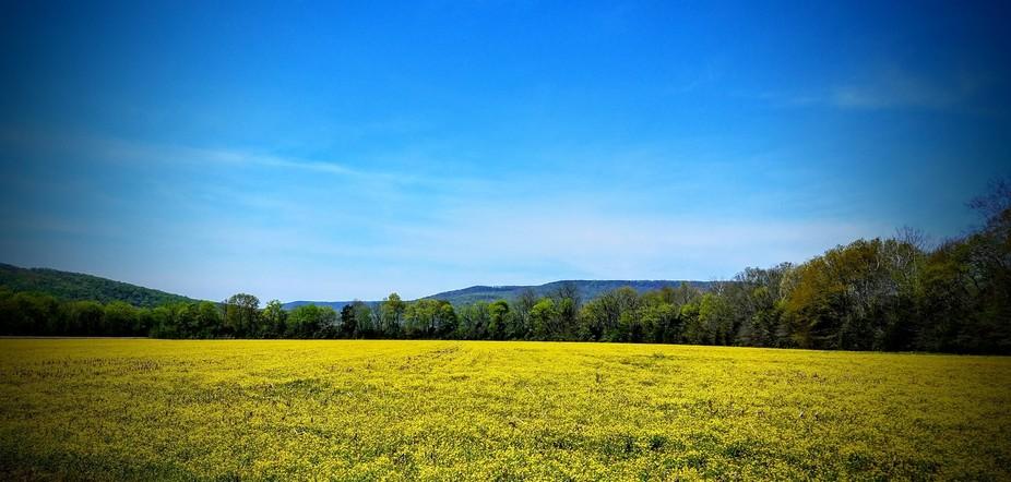 Beautiful Pollen