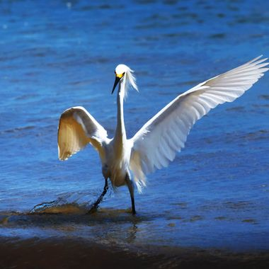 Egret at POB Dancing in the Waves