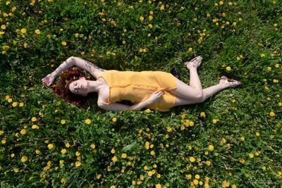 Fields of yellow beauty 2