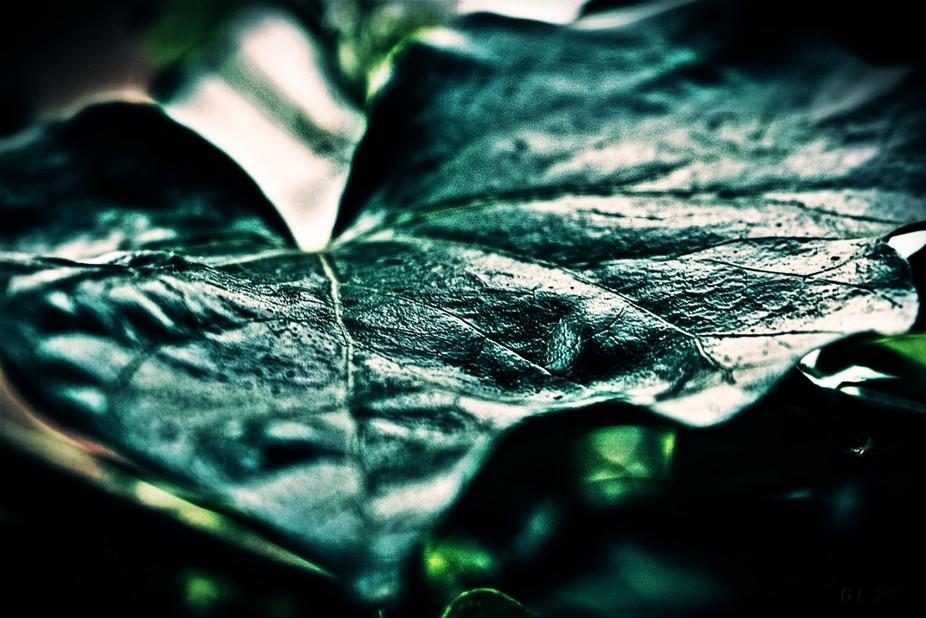 Leaf from my garden