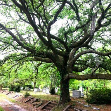 Taken in Oakdale Cemetery, Wilmington, NC