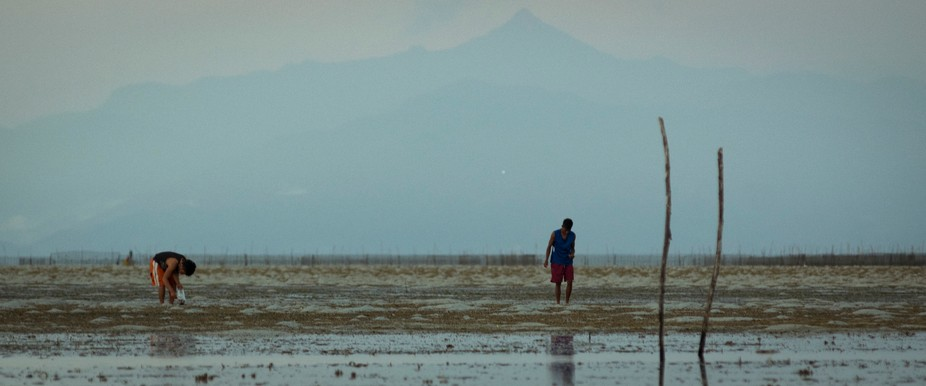 I took this picture on our first day in Puerto Princessa, Philippines. During low tide, local fis...