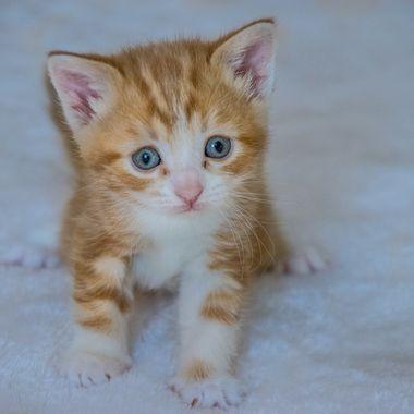 The worried Kitten
