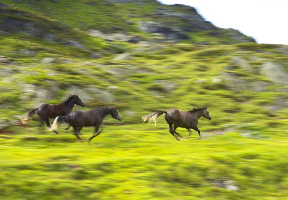 When I was walking to the mountain meadow, I had no intention of shoting these horses, but they s...