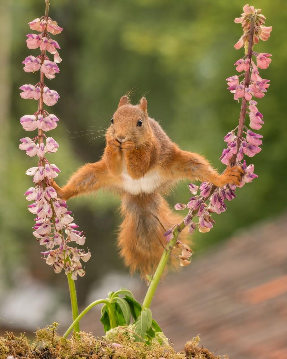 Van Damme by geertweggen - Small Wildlife Photo Contest