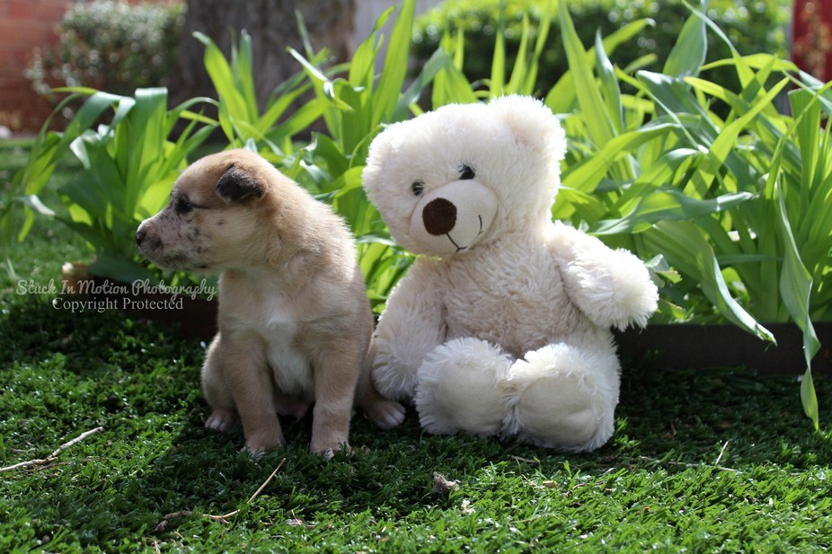 Baby Dog and Bear