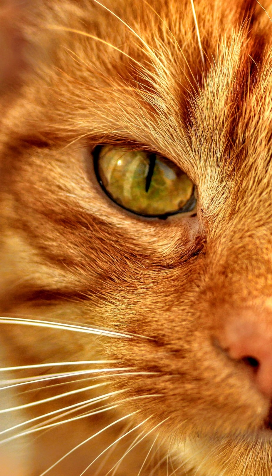 Ginger Stare by Roxy81 - Green Eyes Photo Contest