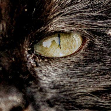 Eye of Kara