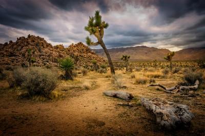 Joshua Tree - Stormy Desert Landscape